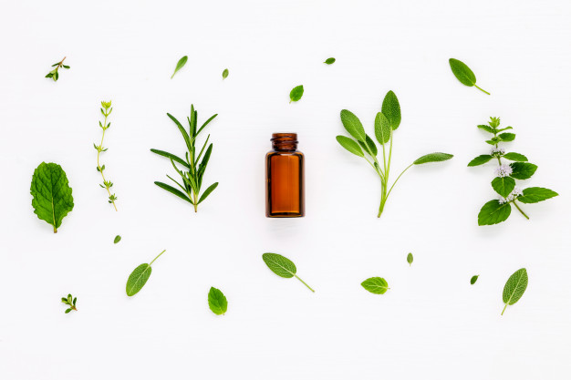 Herbs for Boosting Focus