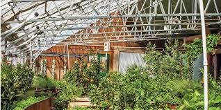 6 tips for installing greenhouses at your place