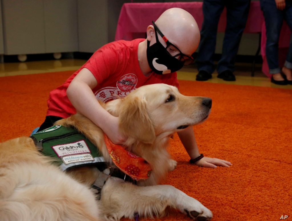 Dogs in Therapy