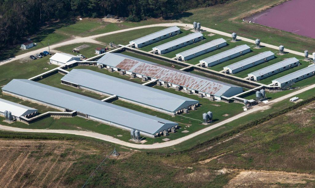 How Factory Farming is the Major Environment Killer